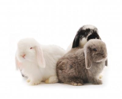 Bunny songs – Nyuszis dalok angolul